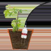 SM150T Soil Moisture Sensor in raspberry plant pot
